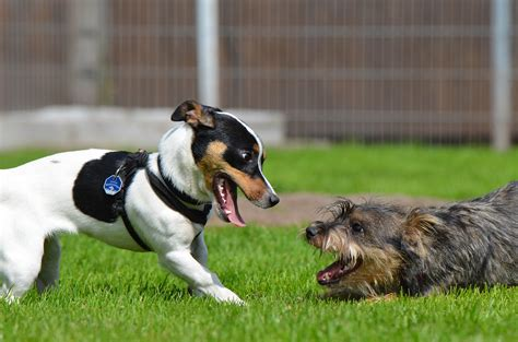 Dog Play: The Acceptable, The Questionable & The