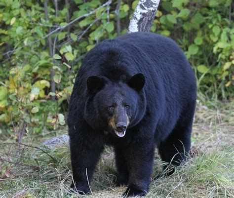 Hiker who ran into two bears in Bailey Canyon Wilderness