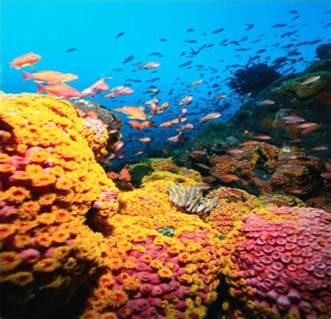 Colorful Coral Reef - The Wondrous Pics