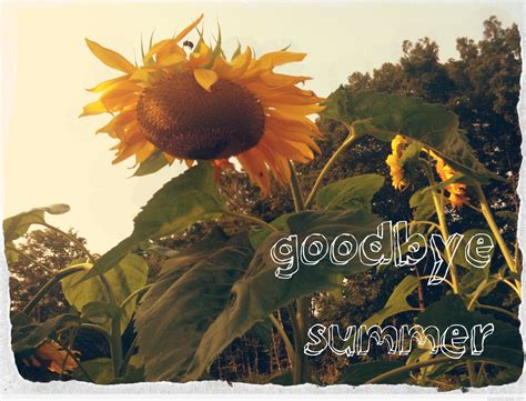 Goodbye summer pictures, wallpapers, sayings hello autumn