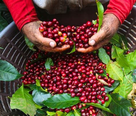 Cafe Imports | Costa Rica